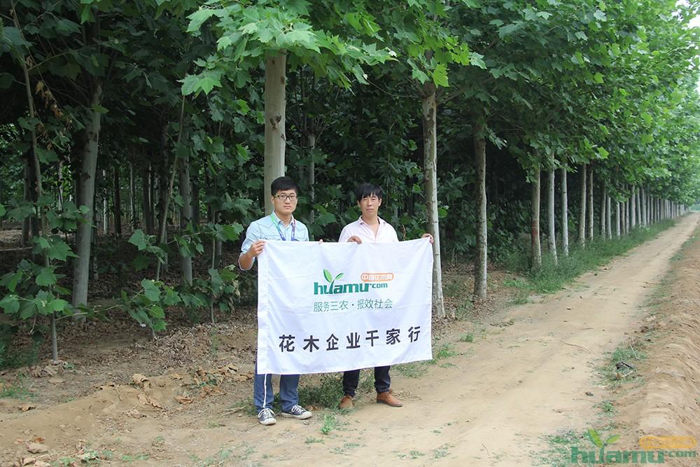 鼎盛园林经理周波与中国花木网记者合影