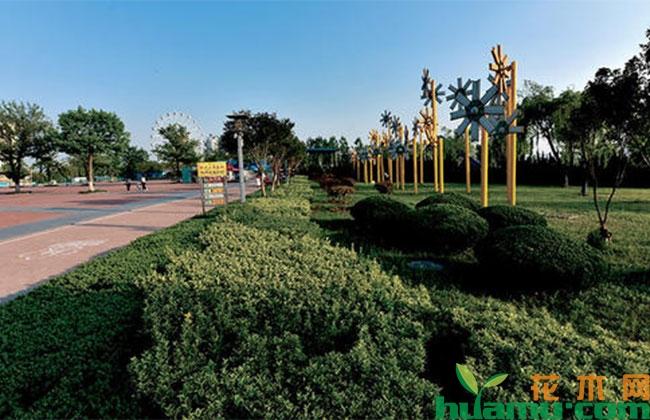 临沂绿化:把城市建成公园