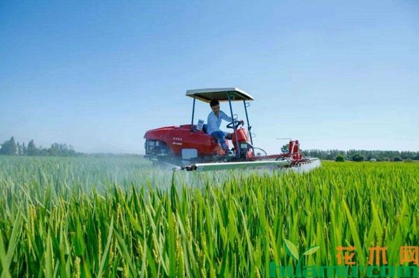 世界粮食节宣传报素材