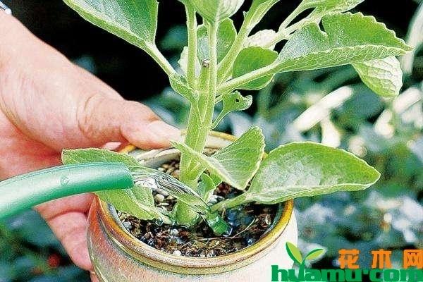 植物茎部结构图