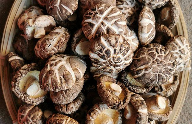 花菇的价格多少钱一斤?2020年最新花菇批发价格