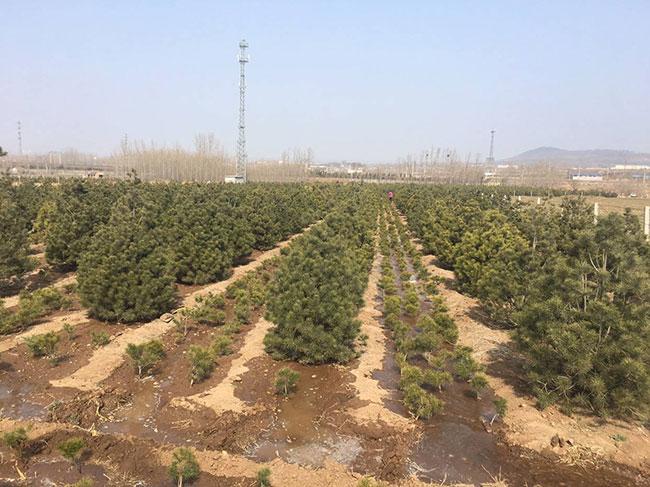 """千亩珍贵树种示范基地""""落户杭州 储值将达1.32亿元"""