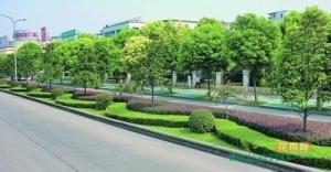 新《武汉市城市绿化条例》正式实施
