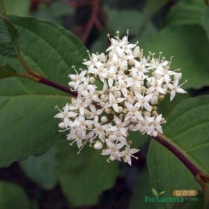 花卉食叶害虫防治方法