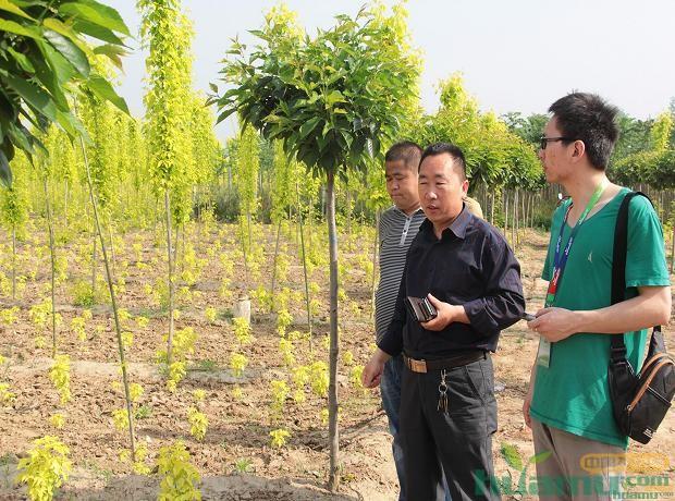 王经理向花木网工作人员介绍基地情况