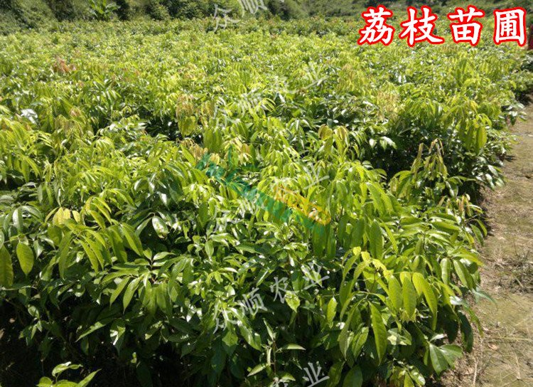 壁纸 成片种植 风景 植物 种植基地 桌面 750_544
