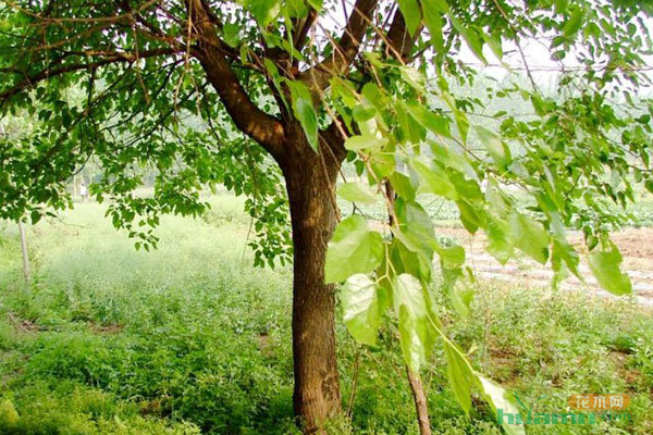 专注于植物租赁,园林养护,景观设计与施工,商务鲜花服务为一体的综合