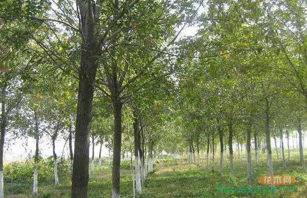 2017年已經過半,南北苗木行情會發生怎樣的逆轉?
