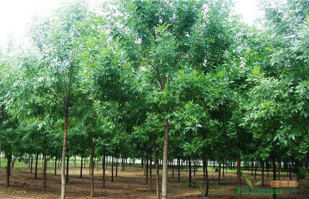 配置一些可以吸收大气中有害气体或杀菌能力的树种,生态效益将更加