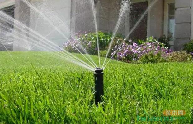 苗木灌溉的方法 夏季苗木灌溉的注意事项