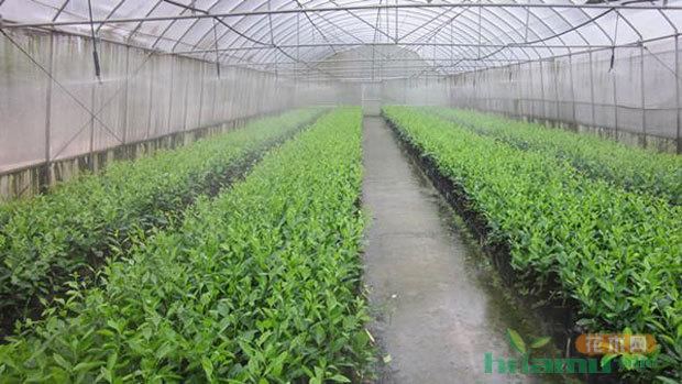 市场进入新时期,新思路才能带动苗木发展