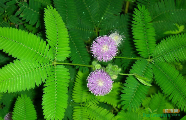 自然界中哪些植物可以感知地震?