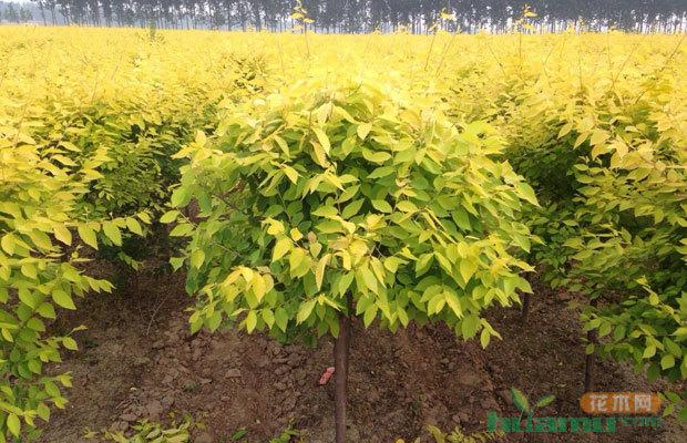 当前苗木形势如何?园林绿化苗木行业竞争分析