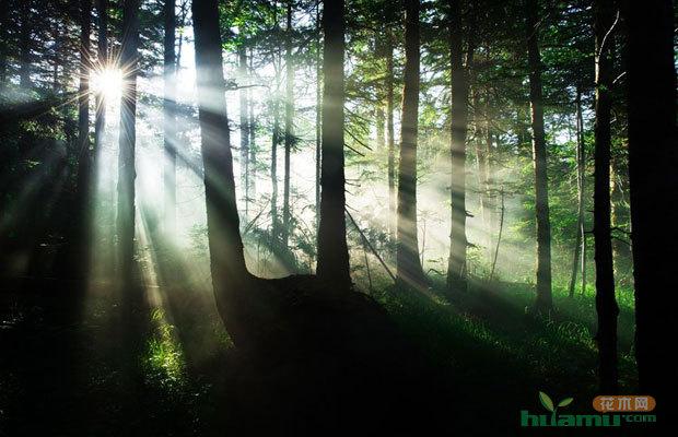 中国森林覆盖增多 计划2020达23%