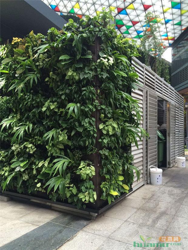 """新加坡""""借地""""绿化,覆盖率高达50%"""