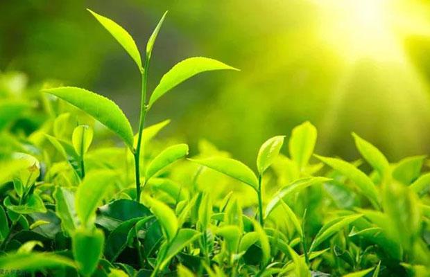 影响苗木价格波动的主要因素有哪些?