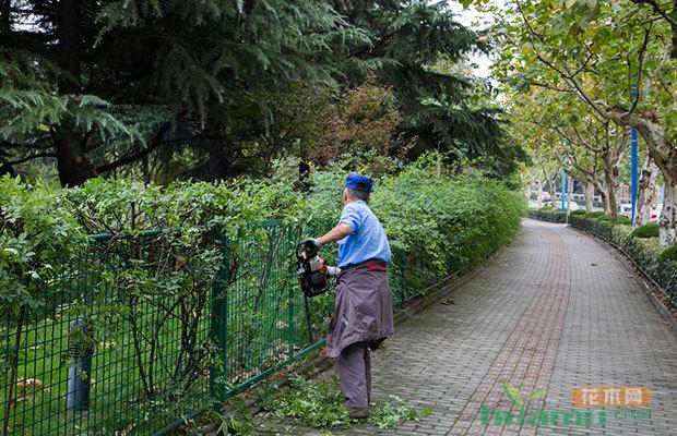 秋季花卉苗木养护要点