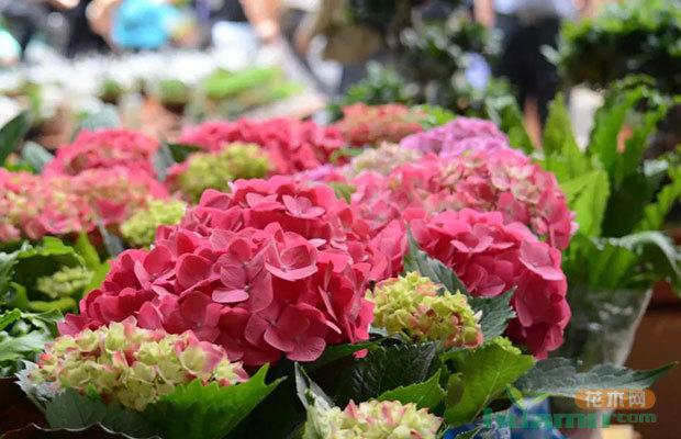 斗南花卉列入云南非公企业百强名单第92位
