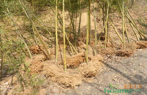 绿化行动,安徽阜阳今年完成造林12万亩