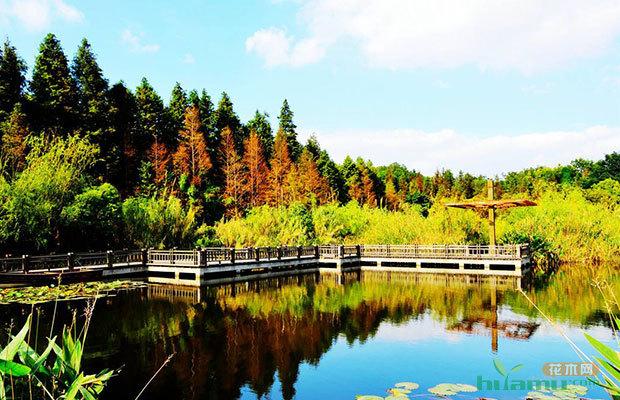 城市蓝皮书:建立体式森林生态公园防治雾霾