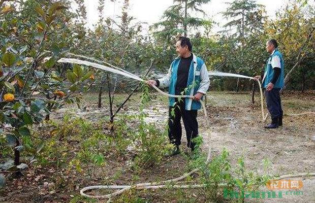 秋冬栽植绿化苗木必备技术