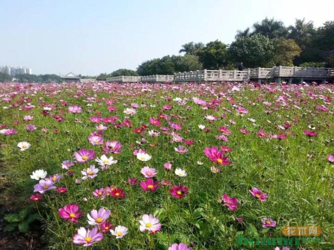 未来五年我国花卉苗木行业发展趋势预测