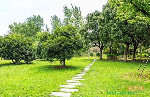 园林绿化设计的八点不宜