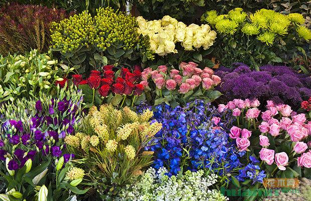 """河南:""""双11"""" 花卉市场玫瑰、百合受欢迎"""