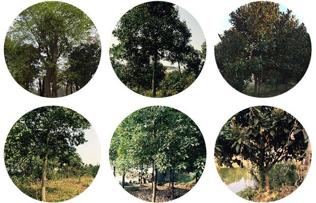 苗圃3.jpg