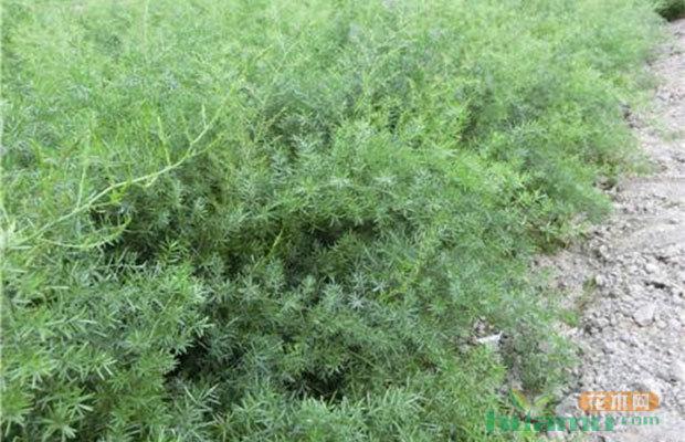 哪个地方苗最好?国内花木集散地分布
