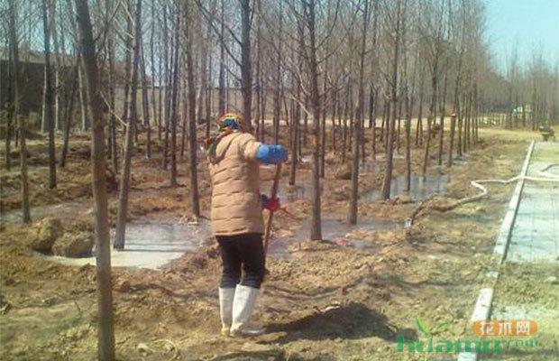 给苗木浇水你会吗?每一种方法都不同