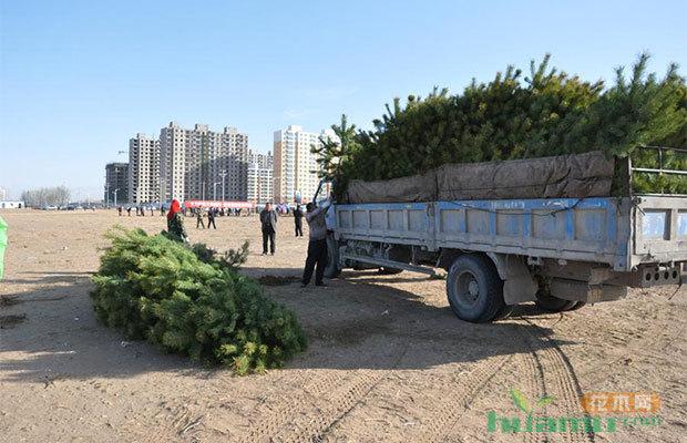 新年苗木生意如何從省錢開始?運輸成本原來可以這么??!
