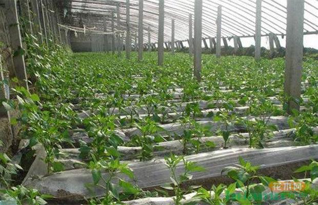 黔東南州產業升級,農文旅一體化發展