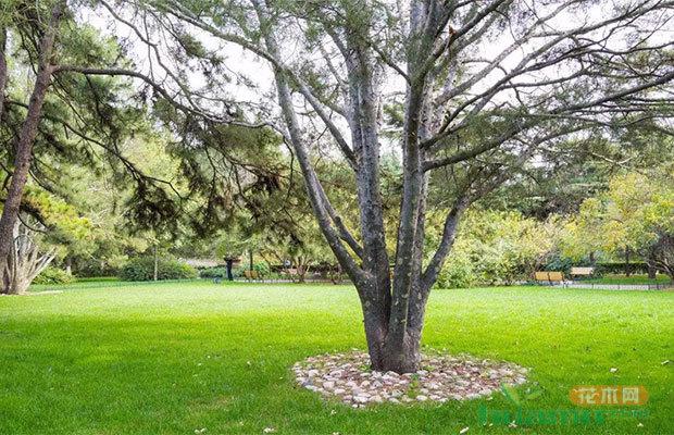 高端苗木势头旺,这些品种你都有吗?