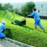 供应苏州绿化养护服务