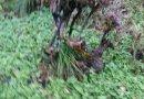 杜娟花下山树桩