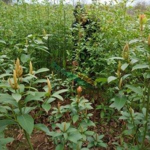 壁纸 成片种植 风景 植物 种植基地 桌面 300_300