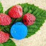 高度20-30公分双季红树莓苗 秋福树莓苗价格 基地批发