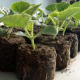 养花高级植料 高档宠物垫材 园艺蛭石