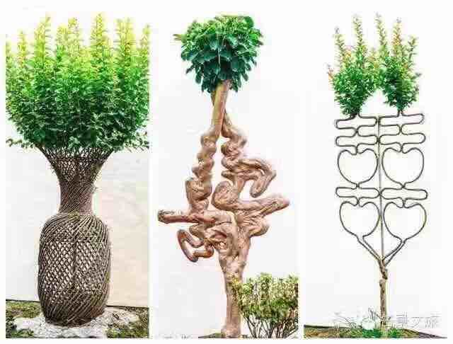 植物花瓶简笔画