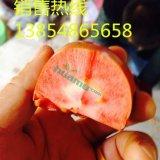 苹果苗 红肉苹果苗 矮化苹果苗