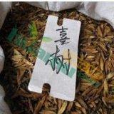 喜树种子,喜树种子价格,喜树种子批发