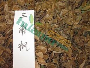 三角枫种子,枫科种子,三角枫种子价格