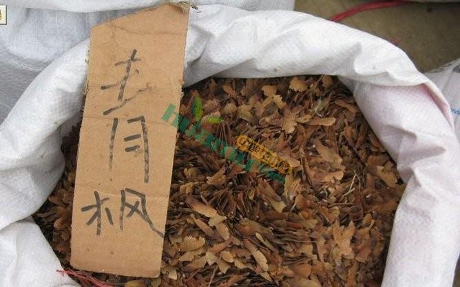 青枫种子,青枫种子价格