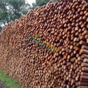 园林园艺绿化河道打桩树木支撑架支撑 杉木支撑架 防倒杆