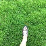 成都草坪基地