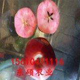 矮化红肉苹果苗