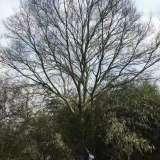 40-50-60朴树