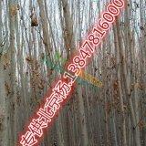 北京杨供应