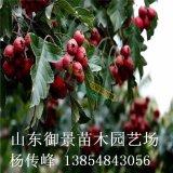 御景苗木场供应3公分山楂树 5公分山楂树价格 山楂树产地